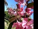 Запахи весны,от них кружится голова.💮🌸🌼🏵️🌺🙃😊