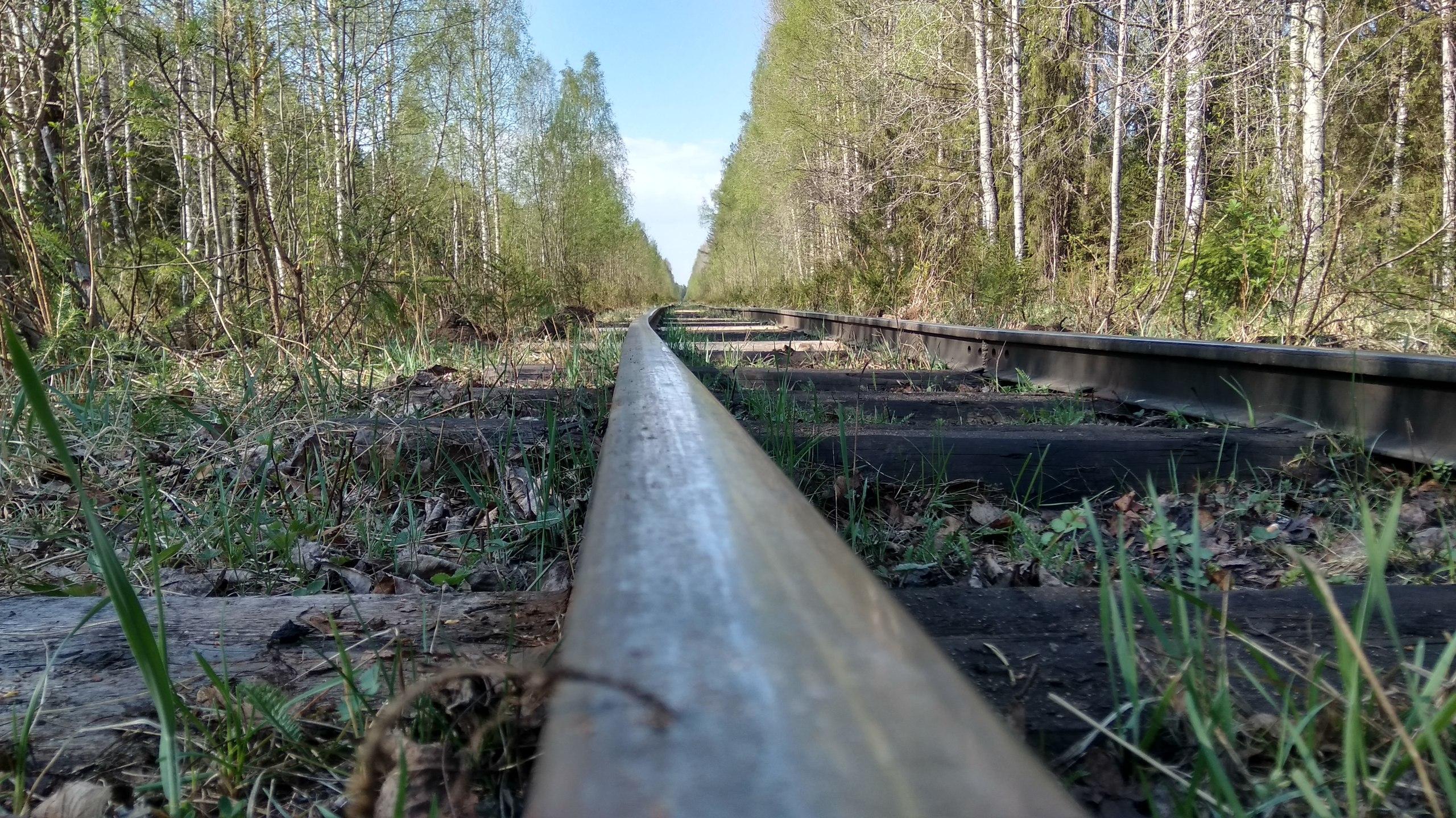 Природа нашего края (ФОТО) | Вологодский край