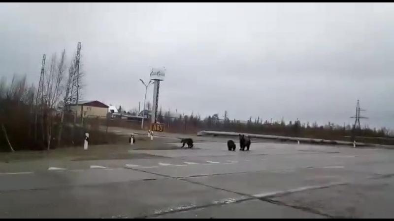 Краснотурьинск ЛПУ Газопровод