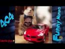 Смешные животные Подборка СМЕШНЫЕ видео про животных HD.mp4