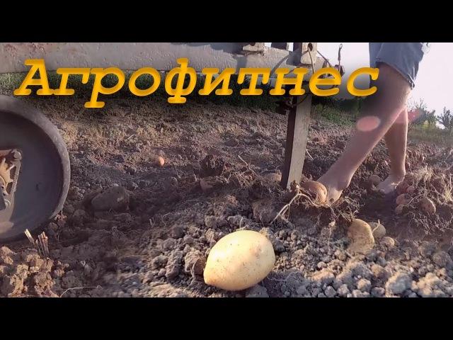 Агрофитнес Зима близко конец Сезона Игры с Картошкой | Yi2 4K |Winter is coming