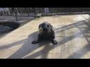 Поздравление тюленя с днём св. Валентина