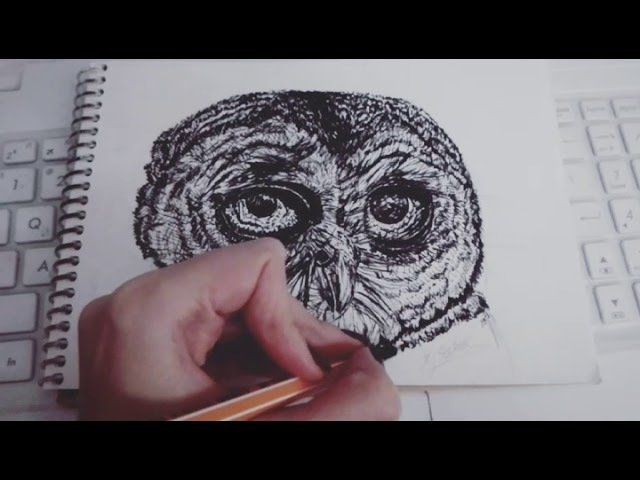 The owl for drawing challenge