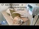 Кастрация и стерилизация собак. Плюсы и минусы