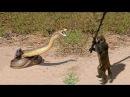 Никто бы не поверил если бы это не сняли на камеру - Животные СПАСАЮТ друг друга