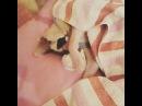 """Вера.Vera. on Instagram: """"Всем доброеутро 🌞 капельканос сладкийзайчик  сьелабыего  потягушки  сладкаяручка  мимими sweetboy  cuteboy  sph..."""