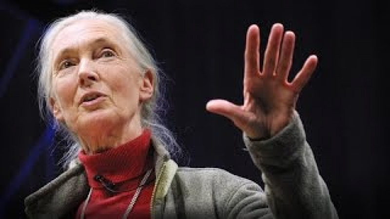 What separates us from chimpanzees Jane Goodall