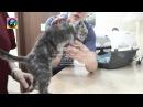 Спасение котёнка Гришы продолжение истории из приюта для животных Дари добро в ...