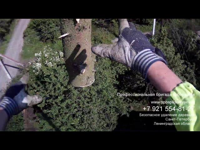 Валка деревьев частями СПб и Лен. обл./Tree removal