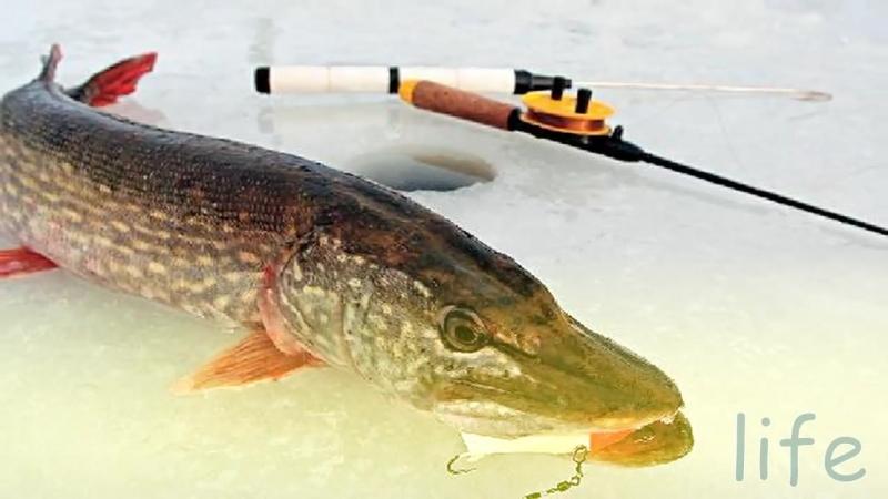 видео рыбалка на день рождения