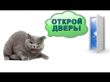Говорящий кот (Открой дверь!)