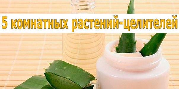 «5 комнатных растений-целителей