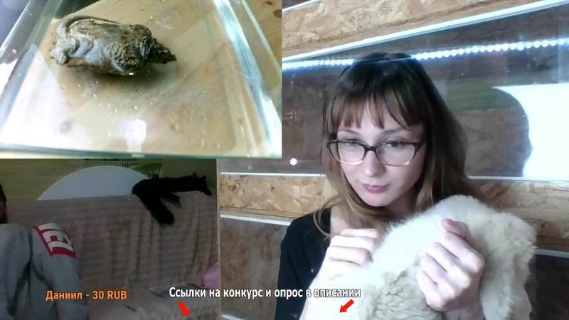 09.04.2017 ГРИФОВАЯ ЧЕРЕПАХА В ЭФИРЕ чэ