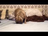 Миша ломает кровать)
