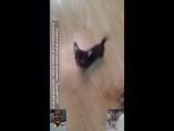 Любимая ватага. Мокрый нос, любимый щеночек.