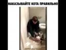"Zhest vidosi on Instagram Как зовут кота шку у вас👇🏽😍😂 жесть фейл жестко жестоко"""