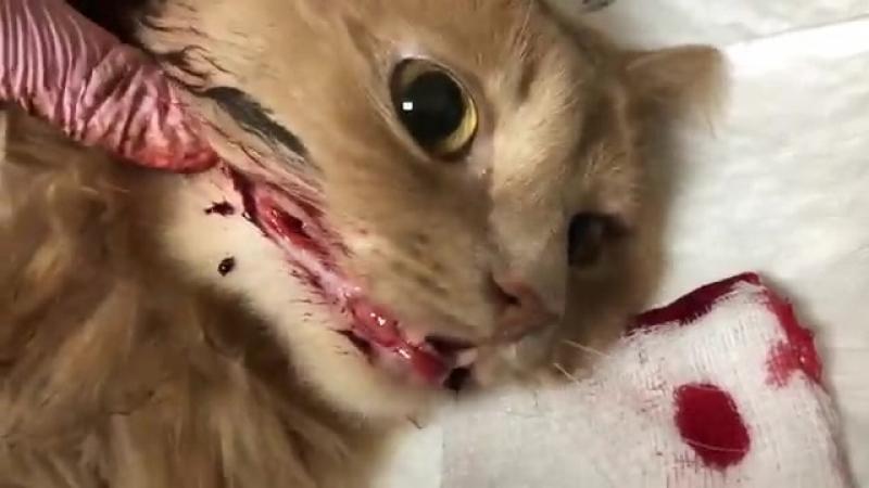 Котик с Кряжа ночь