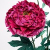 Ростовые и большие цветы от Светланы Копцевой
