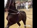 Лошадка танцует
