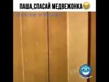 video.prikol___BguskTDnTrF___.mp4