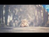 До слез. Одинокий мишка у школы