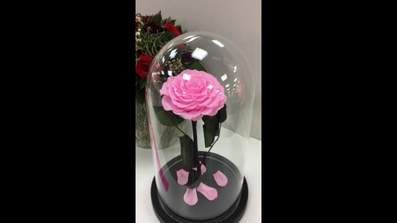 Роза в Колбе Крым Лучший Подарок Роза под Куполом Вечная Роза неувядает 5 лет Оригинал