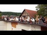 Kaftar Afghani افغانی کفتری - Afghanische Tauben Pigeon Germany