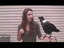 Ravens can talk · coub, коуб