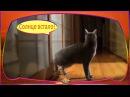 Видео прикол про котов. Короткие приколы про животных