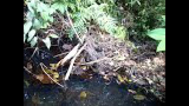 Колония пауков над водой