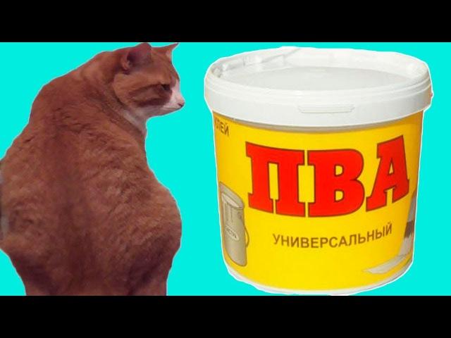 Смешное видео. ПВА или клей для обоев. Кот пьет клей.Смешные коты.