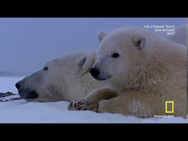 Национальные парки Америки 4 я серия Арктические врата