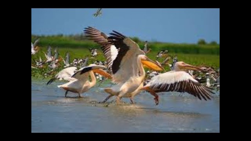 Дунай. Европейская Амазонка. Мир живой природы. Документальный фильм.
