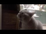 Кот говорит: