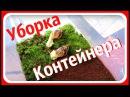 Уборка контейнера улиток Ахатины Мои улитки Гриша и Степан