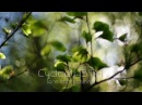 Cyclop H3T-1 lens impressions - CHEAP alternative to Helios 40-2 85mm f/1.5 - bokehlicious!
