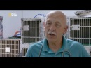 невероятный доктор пол 1 сезон 4 серия Ветеринар за работой