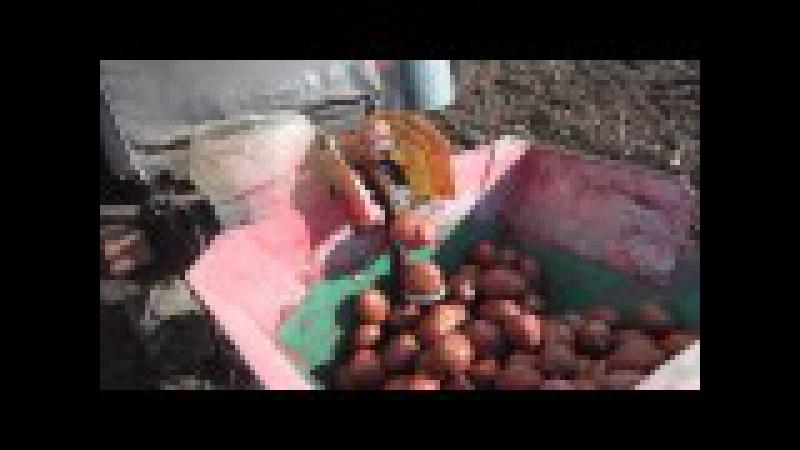 Посадка картошки мини-трактором (мотоблоком) на 1 га земли