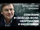 Константин Анохин о сознании свободе воли науках о мозге и философии