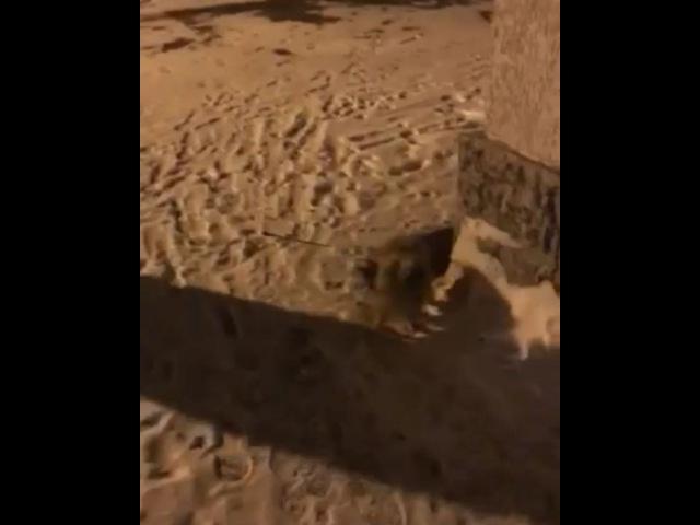 Pavlova_marinka video