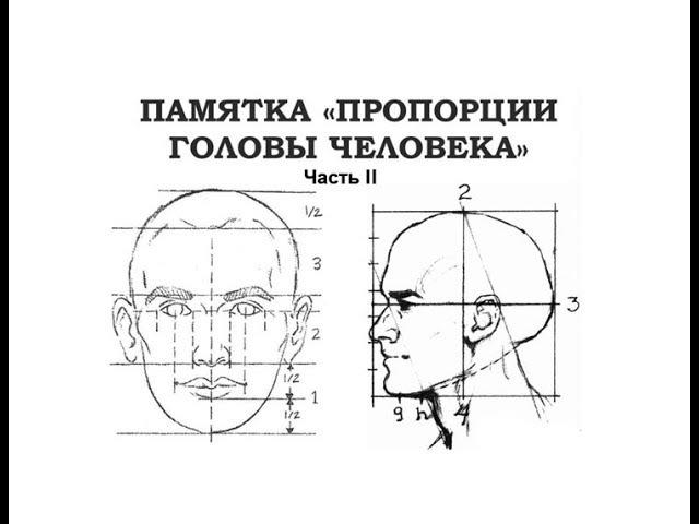 Пропорции головы. Часть 2. Поэтапное рисование портрета