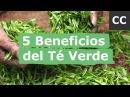 5 Beneficios del Té Verde | Ciencia de la Comida
