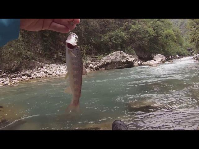 Буйные форельки кавказских рек
