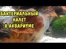 БАКТЕРИАЛЬНЫЙ НАЛЕТ В АКВАРИУМЕ КАК БОРОТЬСЯ BACTERIAL PLAQUE IN THE AQUARIUM HOW TO FIGHT