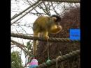 NC Пасхальные яйца в Лондонском зоопарке
