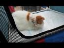 21.04.2018 На выставке кошек