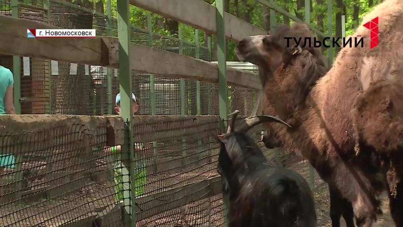 В Новомосковске верблюд Жора поселился в семье ослицы Нины и козла Бориса