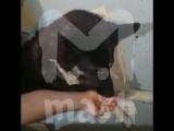 В Самаре собаку-поводыря выкинули на мусорку после того, как её парализовало
