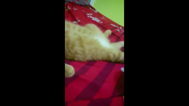 Вот как спит мой кот