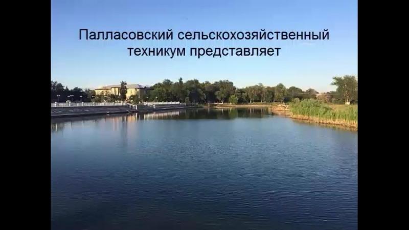 Палласовский сельскохозяйственный техникум Мы за чистый город!